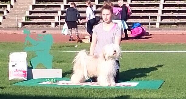 Enzo 23.08. Dog show