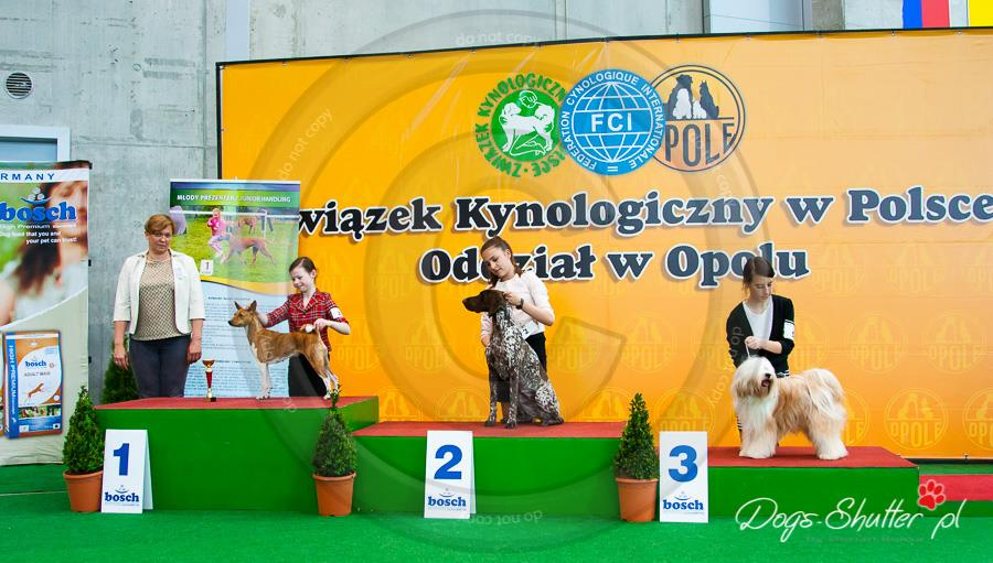 Novosti_29.04._DJ